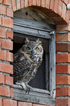 'Owl do I love thee? Let me count the ways. Hoot Hoot Hooray! Life's A Hoot Remember Whooo You Are. Bless this Nest. Owlways Love One Another.' Cute Owl Sayings ♥