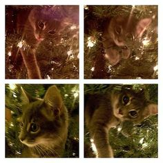Cats in Gardens: Merry Christmas to Cat and Garden Lovers Everywhere!