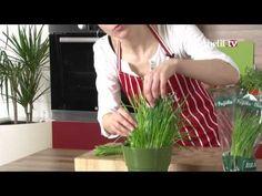 Jak pěstovat a uchovávat pažitku Russian Recipes, Korn, Plant Hanger, Herbs, Make It Yourself, Polish, Youtube, Vitreous Enamel, Herb