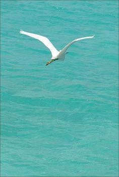 Volara,oooo,cantareoooo,azul pintado de azul.