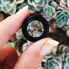 A Close Look at Mobile Macro Photography | Enlight Blog