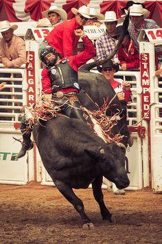 Bull riding - Calgary
