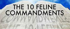 THE TEN FELINE COMMANDMENTS...lol too funny