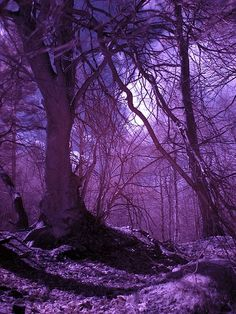 ✯ Moonlight through the Pines The purple hues are amazingly beautiful Purple Rain, The Purple, All Things Purple, Shades Of Purple, Purple Stuff, Purple Trees, Beautiful Places, Beautiful Pictures, Purple Aesthetic