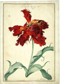 Tulipbook of Karlsruhe, 1730. Watercolor. Karlsruher Tulpenbuch, Badische Landesbibliothek, Germany  Tulipbook of Karlsruhe, 1730. Watercolor. Karlsruher Tulpenbuch, Badische Landesbibliothek, Germany  (Source: digital.blb-karlsruhe.de)