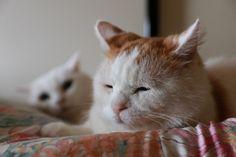 しろとちーちゃん - かご猫 Blog