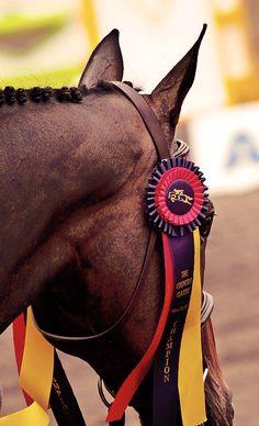 horse show  ribbon winner  The Polohouse