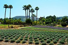The farm is open year round, but from July to April it can be visited by appointment only. Once lavender season is in full bloom in May and June, hours are Wednesday through Sunday from Weekend Trips, Day Trips, Beautiful Places To Visit, Travel Abroad, Southern California, Spring Break, Wednesday, Vineyard, Places To Go