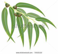 Eucalyptus leaves Stock Photos, Eucalyptus leaves Stock ...