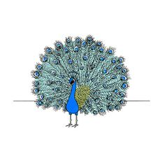 Peacock print Pen and ink peacock drawing by sloeginfizz on Etsy...Cannot wait to get!