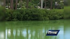 Dr. Zachary Jud spoke Thursday to a group of people at the Florida Oceanographic Coastal Center about toxic blue-green algae blooms in South Florida's bodies of water. Scientist cautions blue-green algae can have serious health impact People should avoid contact, wear masks, scientist says