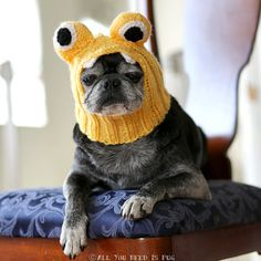 Dog Hat  Little Monster Hat by AllYouNeedIsPugShop on Etsy, $28.00 #pug #pugs #allyouneedispug #dogs #pets #petfashion #doghat