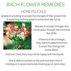 Natural Cures, Natural Health, Bach Flowers, Honeysuckle Flower, Naturopathy, Healing Herbs, Emotional Healing, Homeopathy, Healthy Mind