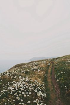 Coastal walk #Landscape #nature #path #cliff | Thomas Hanks | VSCO Grid