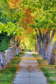 It's a beautiful world - feen-dos: Autumn Sidewalk, Helena, Montana Studio Background Images, Photo Background Images, Hd Background Download, Picsart Background, Blurred Background, Jardim Natural, Foto Nature, Mabon, Photo Booth Backdrop