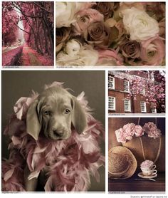 Pink & brown mood/color collage