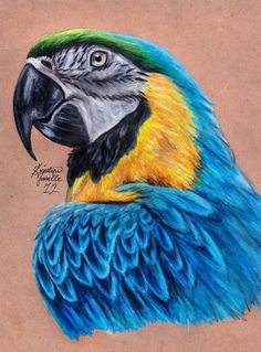 Blue and Gold Macaw Artwork