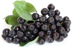 Some of the most impressive health benefits of chokeberries include their ability to improve digestive processes, protect the body against free radicals, reduce inflammation, protect the immune system, prevent diabetes, improve eye health, slow the effects of aging, combat cancer, lower blood pressure, and stimulate repair to the body.
