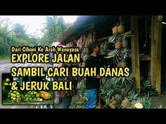 Explore Jalan Wanayasa Mencari Buah Danas Dan Jeruk Bali - YouTube Bali, Explore, Youtube, Exploring, Youtubers