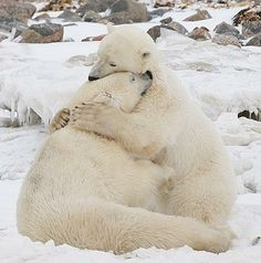 Animals And Pets, Baby Animals, Funny Animals, Cute Animals, Love Bear, Big Bear, Animal Hugs, Tier Fotos, Cute Animal Pictures