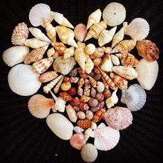 Shells Eighty Mile Beach West-Australia Shells, Australia, Beach, Places, Food, Conch Shells, The Beach, Seashells, Essen