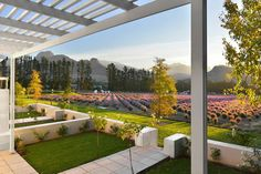 Franschhoek- Lavender Farm Guest House- Wine Country.