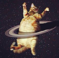 space cat runs rings around you Funny Cats, Funny Animals, Cute Animals, Fat Cats, Cats And Kittens, Crazy Cat Lady, Crazy Cats, Galaxy Cat, Space Cat