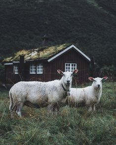 "2,399 Likes, 16 Comments - Norway / Norge  (@norway) on Instagram: ""#Norway : @livingitrural"""