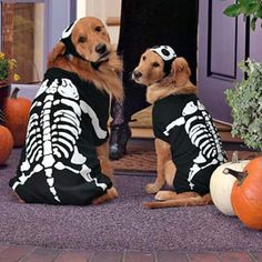 Dog skeleton costume