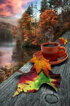 Autumn Morning Sunrise on this autumn day appeared with glimmering light. Autumn Morning, Autumn Day, Autumn Leaves, Autumn Photography, Creative Photography, Creation Art, Autumn Scenes, Fall Pictures, I Love Coffee