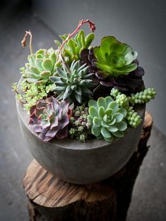 this site has some gorgeously creative ideas for indoor succulents - Lila B Design