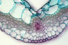 Photos of the Amazing and Gruesome World Under a Microscope: Leaf of a Virginia spiderwort