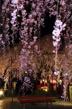 Syika Tenman-gu shrine, Kyoto, Japan: photo by 92san
