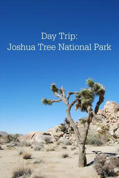 Day Trip Joshua Tree National Park - Campfire Chic