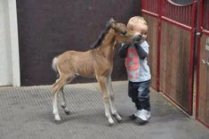 touching animal photos