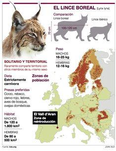 lynx lynx anatomy - Ricerca Google Anatomy, Lynx Lynx, Movie Posters, Google Search, Iberian Lynx, Deer, Film Poster, Billboard, Film Posters
