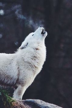 Have you ever wondered what animal you feel most connected with? Maybe a wolf, or a fox? Find out your spirit animal and let your spirit soar! IM A 🐺 WOLF! YAASSS MY FAV ANIMAL Nature Animals, Animals And Pets, Funny Animals, Cute Animals, Strange Animals, Wildlife Nature, Baby Animals, Wolf Spirit, My Spirit Animal