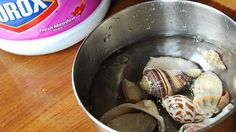How to Clean Seashells (with pictures) - wikiHow