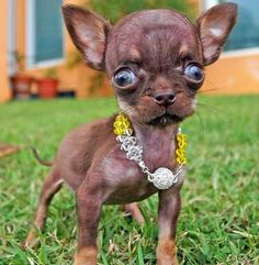 I want this lil pup.