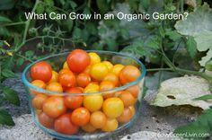 Groovy Green Livin What Can Grow in an Organic Garden?