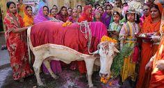 """""""O Grito do Bicho"""": Animal sagrado e no poder: indianos querem criar M..."""
