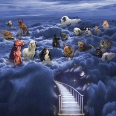 A lovely image of our beloved pets once they've crossed over the Rainbow Bridge, sigh...