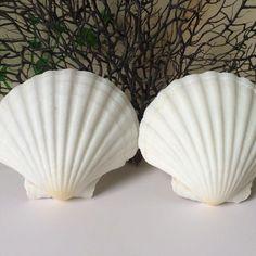 Conchas do mar naturais grande vieira branco mediterrâneo estilo sea shell Adesivo de parede do aquário acessórios de decoração para casa em Conchas & Estrelas Do Mar de Home & Garden no AliExpress.com | Alibaba Group