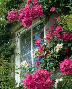 Cottage Windows, Garden Windows, Country Cottage Garden, Rose Cottage, Cottage Gardens, Beautiful Gardens, Beautiful Flowers, English Country Gardens, English Cottage