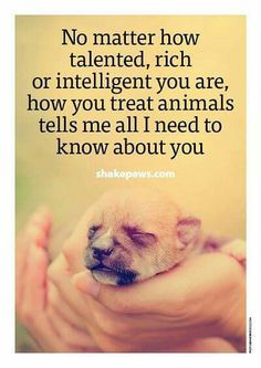 25 Inspirational Advice Given By The Pets In Your Life 25 Inspirational Advice G. 25 Inspirational Advice Given By The Pets In Your Life 25 Inspirational Advice Given By The Pets In Amor Animal, Mundo Animal, I Love Dogs, Puppy Love, Game Mode, Animals And Pets, Cute Animals, Stop Animal Cruelty, Animal Quotes