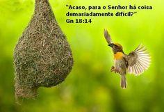 Mensagem do Dia: Humilhai-vos, pois, debaixo da potente mão de Deus...