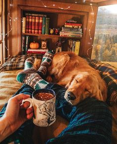 a golden retriever. Cute Puppies, Cute Dogs, Dogs And Puppies, Doggies, Animals And Pets, Cute Animals, Sweet Dogs, Autumn Aesthetic, Autumn Cozy
