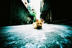http://www.lomography.com/photos/15151349