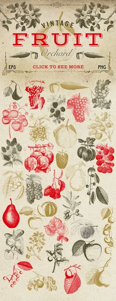 Vintage Fruit Vector Graphics by Eclectic Anthology on @creativemarket