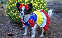 Cute Doggies in Funny Costumes